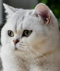Cleopatra Silver EstiBri