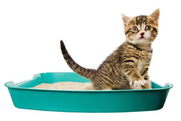Syndrom-urologiczny-kotów