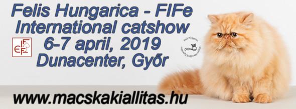 Medzinárodnávýstava mačiek 6-7 apríl Győr,Dunacenter