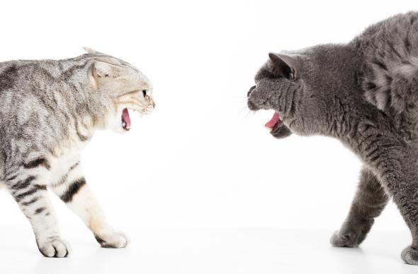 agresywne-koty