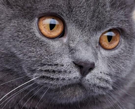 depositphotos_19637499-stock-photo-domestic-cat