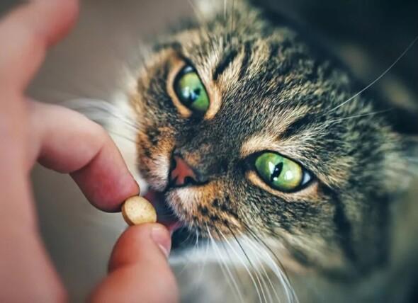 kot-dostaje-tabletke