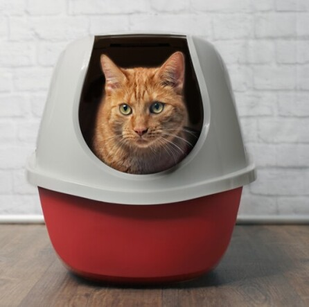 kot-w-kuwecie