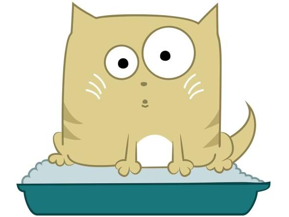 kuweta-dla-kota