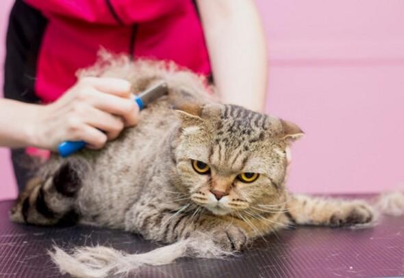 zadowolony-kot-w-salonie-dla-zwierzat-pielegnacja-kotow-w-salonie-pieknosci-dla-zwierzat-domowych-mistrz-rozczesuje-nadmiar-wlosow-express-molt_170532-166 (1)